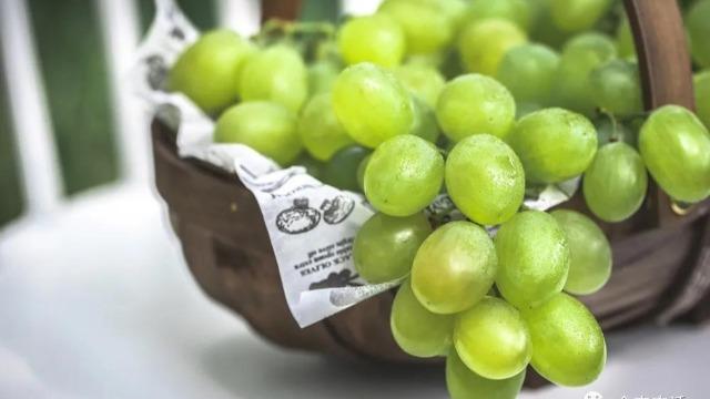 一年之计在于春,葡萄丰产要养根