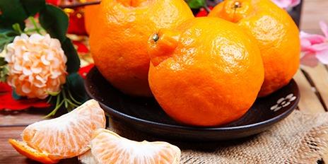 464X232 柑橘