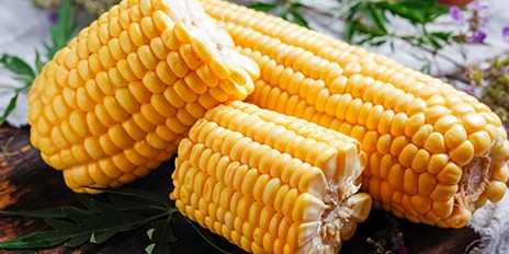 464X232 玉米