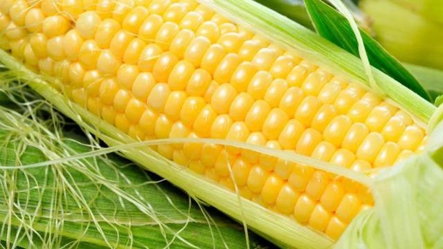 玉米增产又抗倒,全丰植调少不了