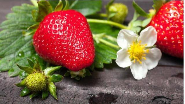 全丰和您聊聊草莓控旺、膨果的秘密