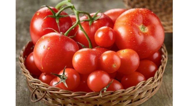 番茄转色难?全丰科技有方法!