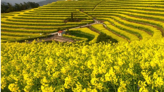 2021农药大宗产品价格形势